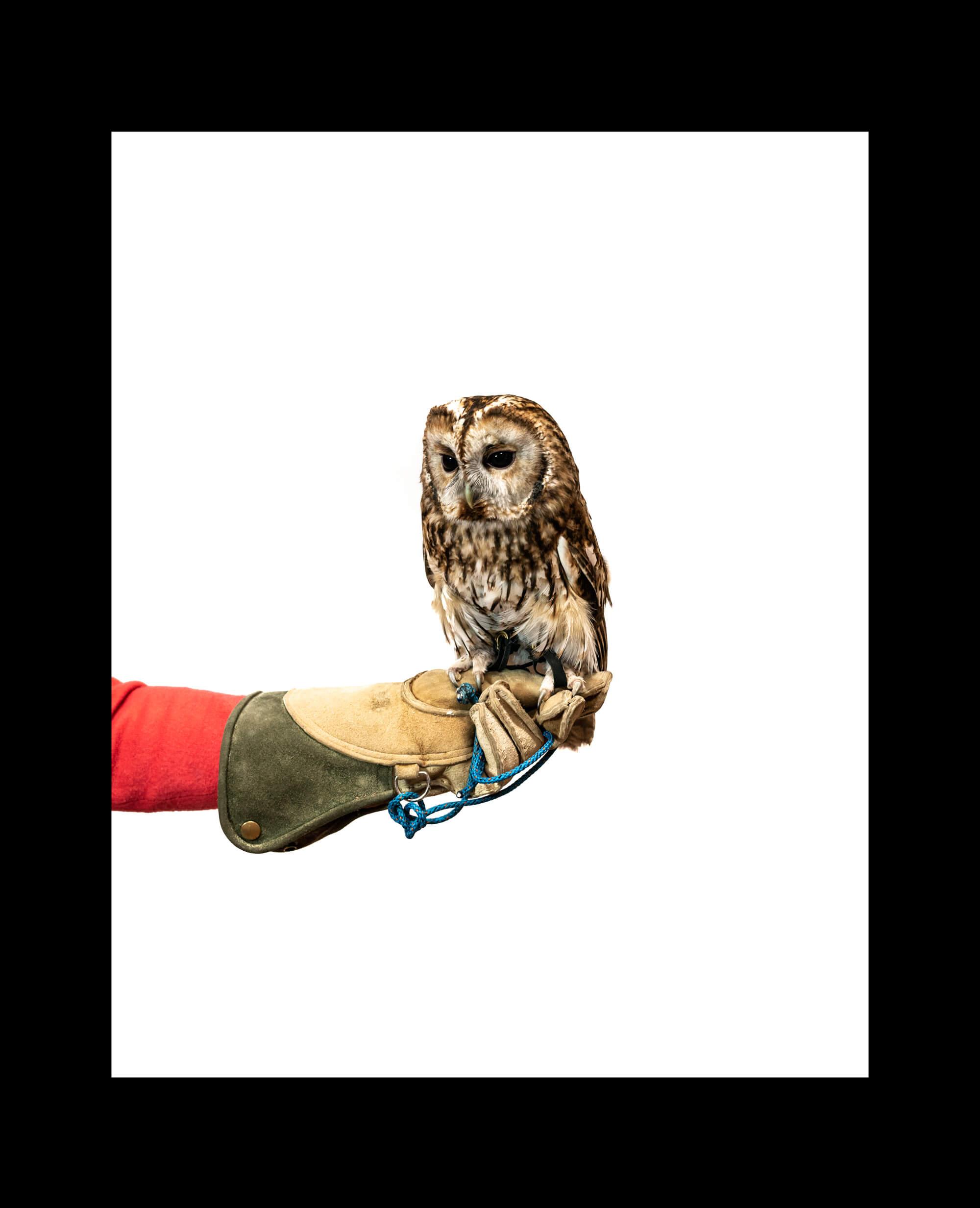 owl-border-4.jpg