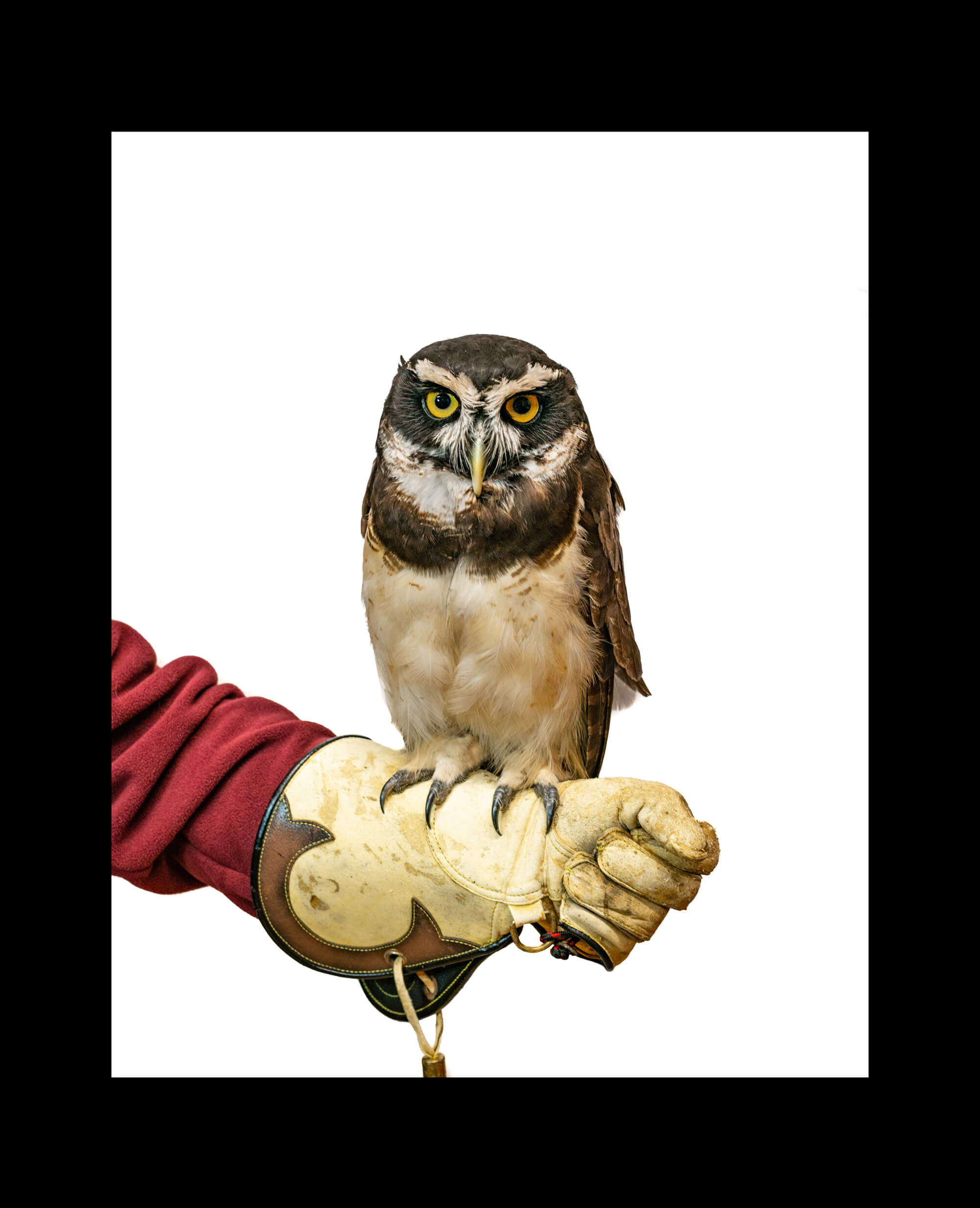 owl-border-3.jpg