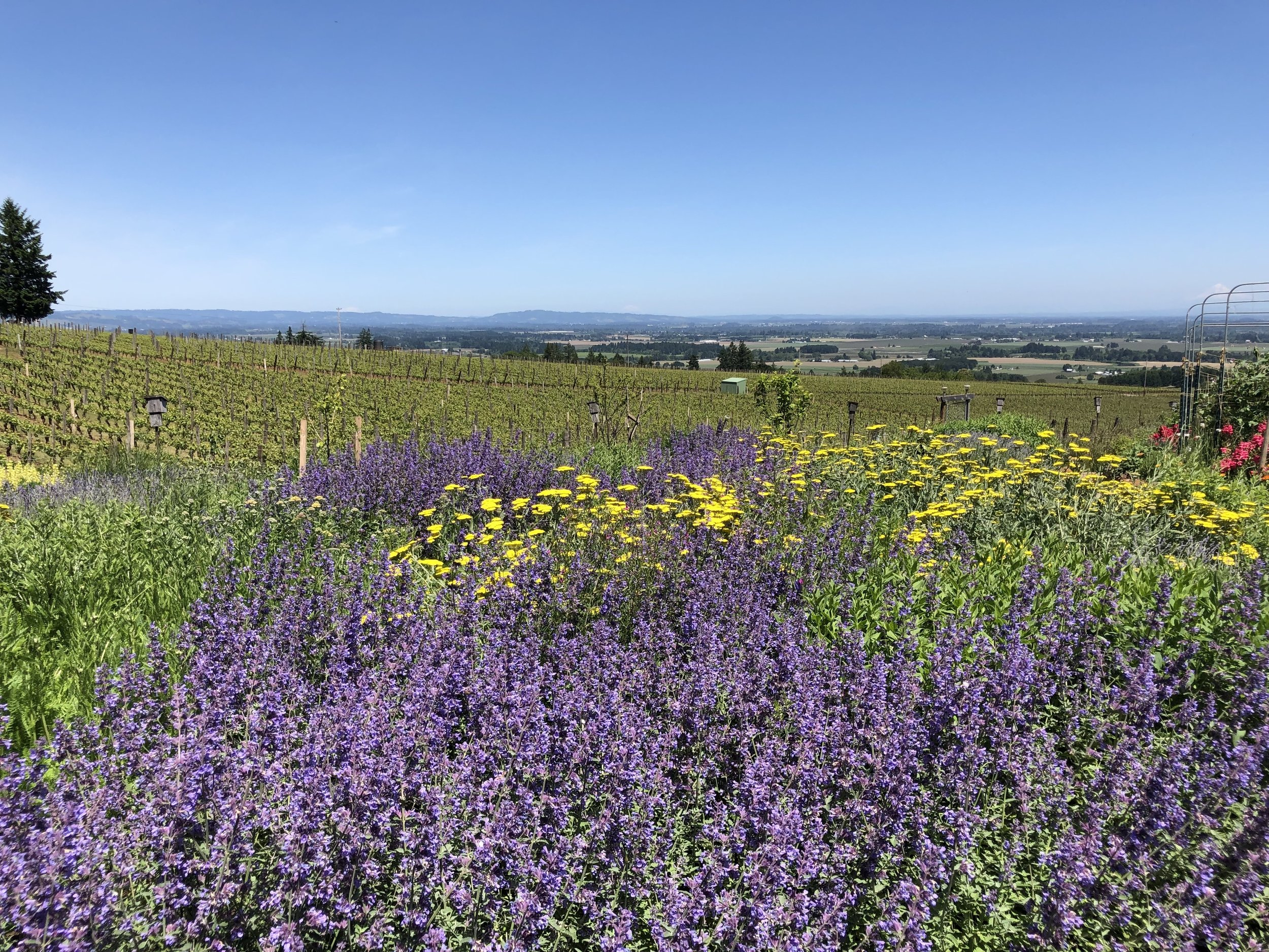 Winery and wildflowers