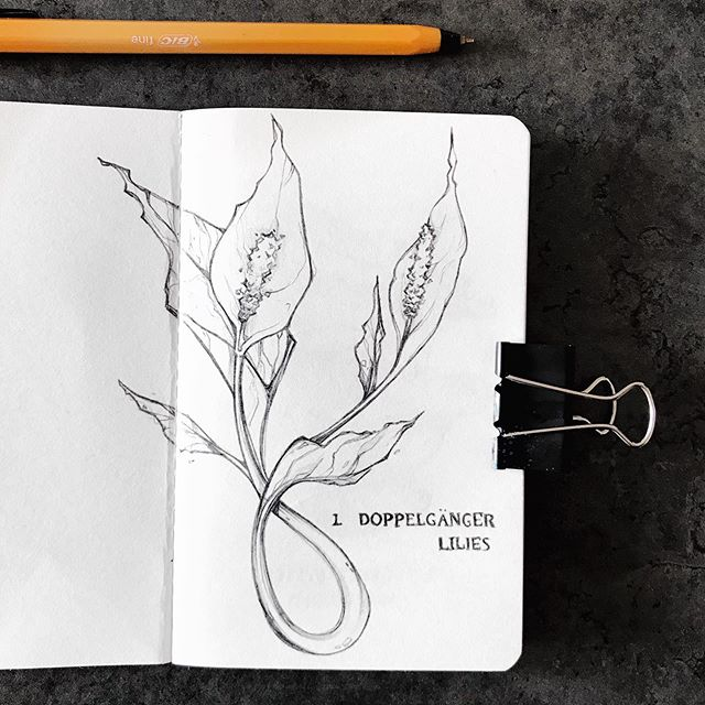 My first 2 drawings for #inktober2019 🌱🌿 it's already been such a thrill seeing what everyone else has been up to- feel like my timeline is overflowing with creative magic and can't wait to see how the month will progress for everyone. Massive props to @jakeparker for creating what has become such a staple in my year, this ever-growing community and this challenge that is constantly evolving 🖤🖤🖤 I will be drawing every day but will probably only post photos a few times a week to catch you all up. I'm really excited for the theme I've come up with this year 😊😊😊 but I'll tell you all about it in my video going up later tonight! What are you all up to? Finding your stride with this monthly challenge yet? Or are you going to give it a miss this year? #inktober #botanicalillustration #lilies #mushrooms #botanical #flowers