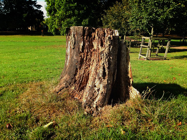 stump-485696_640.jpg