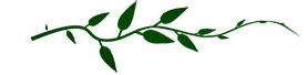 vine-green-single-1.jpg