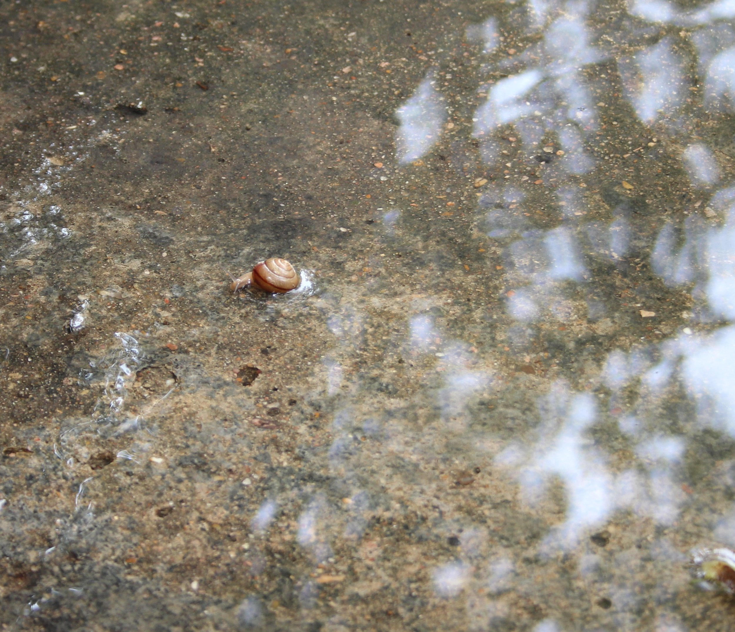 snail zoom.jpg