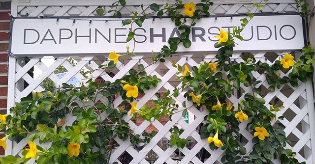 Happy Friday!! #757hairstylist #757 #coastalvirginia #daphneshaircarestudio #sevenhaircare #lorealpro #northcolley #northcolleyave #surfacehaircare #surface #ghentnorfolk #larchmont #ghentlivingmagazine