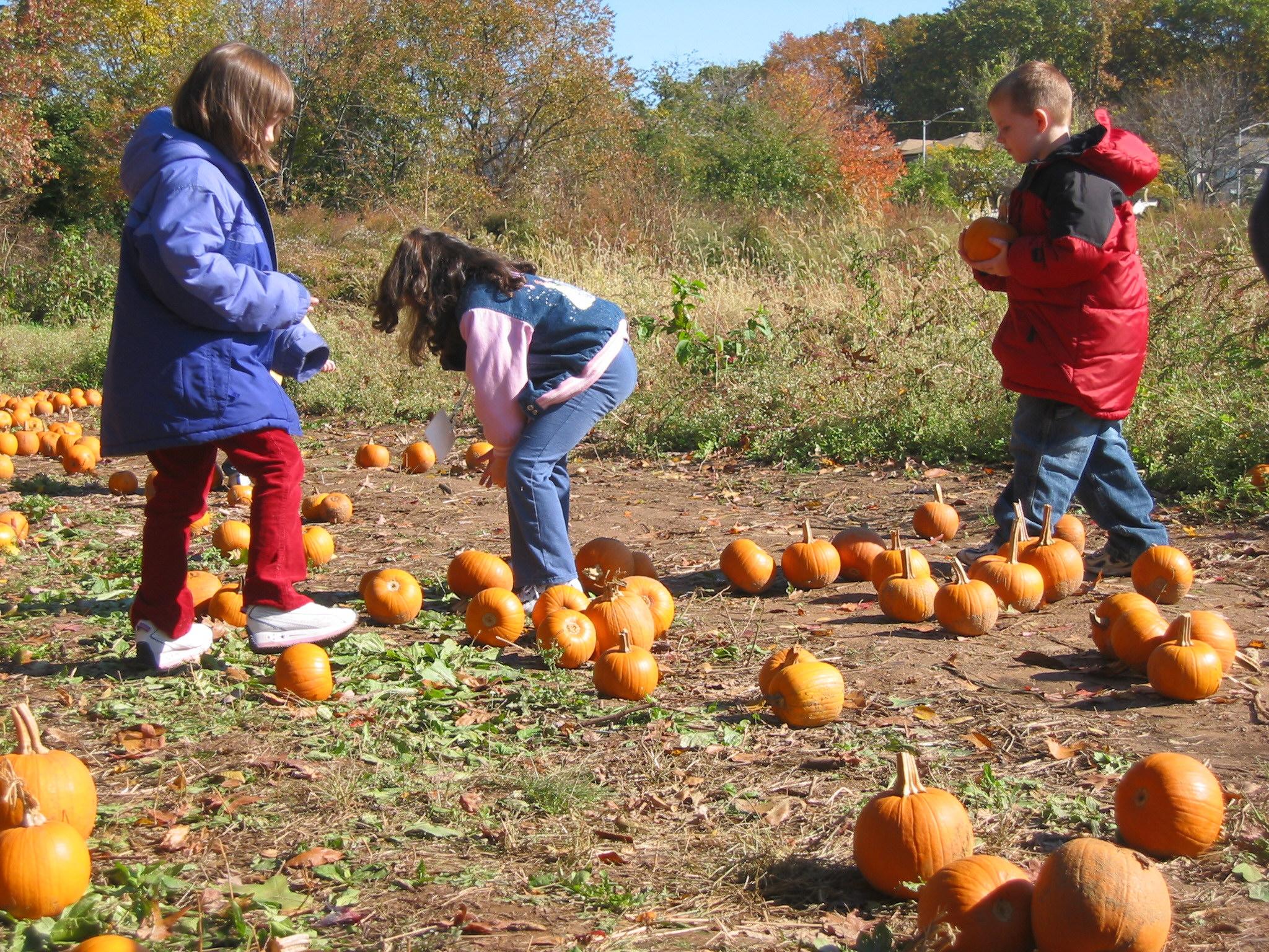 Pick Pumpkin Trio.jpg