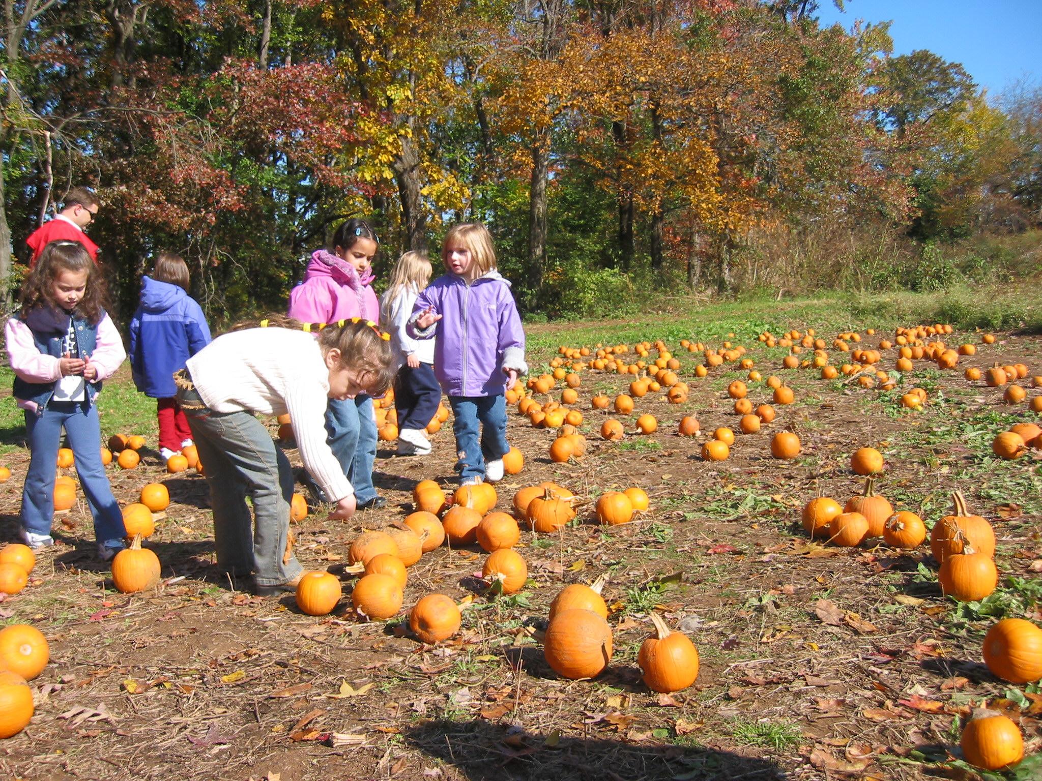 Pick pumpkin group.jpg
