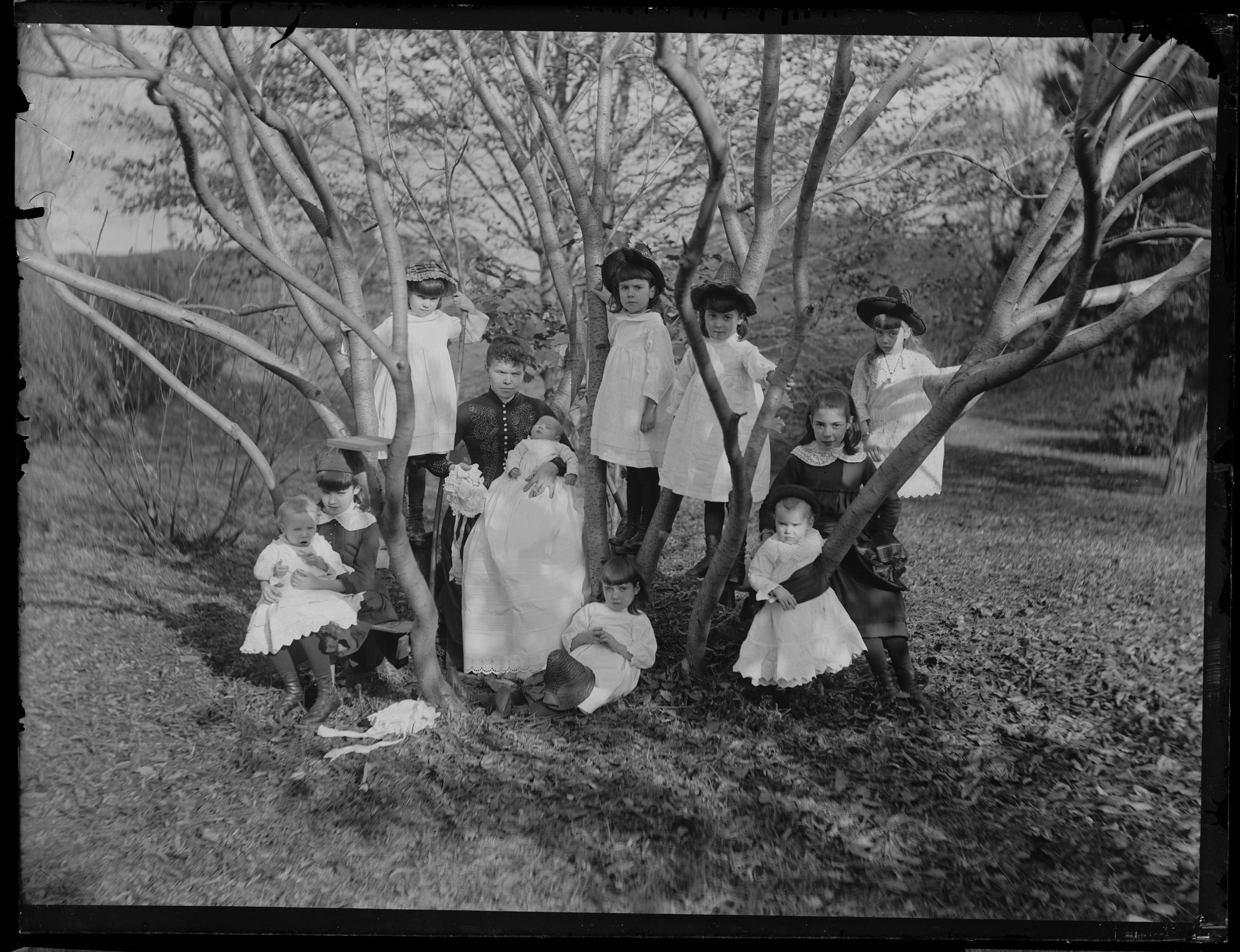 Cocroft children in the trees, Clear Comfort, November 2, 1886