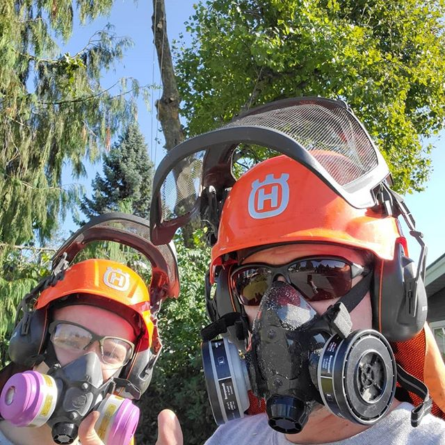 Removing a gnarly London Plane tree in Mission today. Respirators, on top of our regular safety gear are mandatory for this type of tree. If you have bad allergies and have a London Plane tree nearby, you may want to consult your local arborist for more info. They are THE worst!  #treeguys #safetyfirst #londonplane #londonplanetree #arborist #removals #allergies