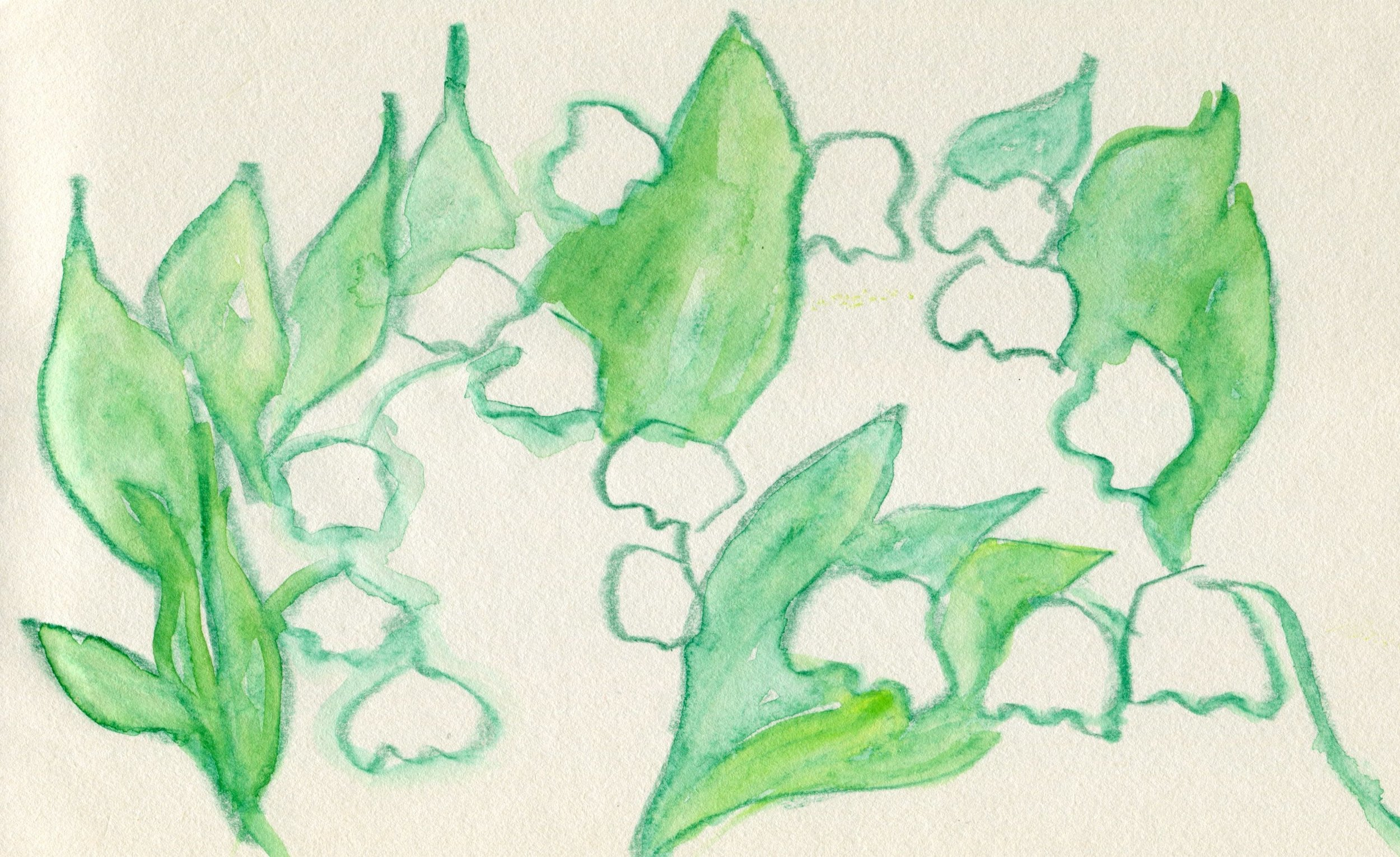 Lilies of the field image.jpg