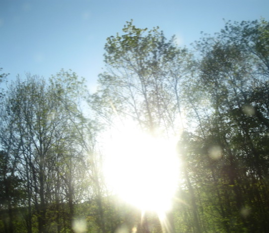 Light through the trees.JPG