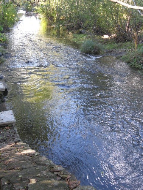 Creek flowing, Santa Rosa copy.jpg