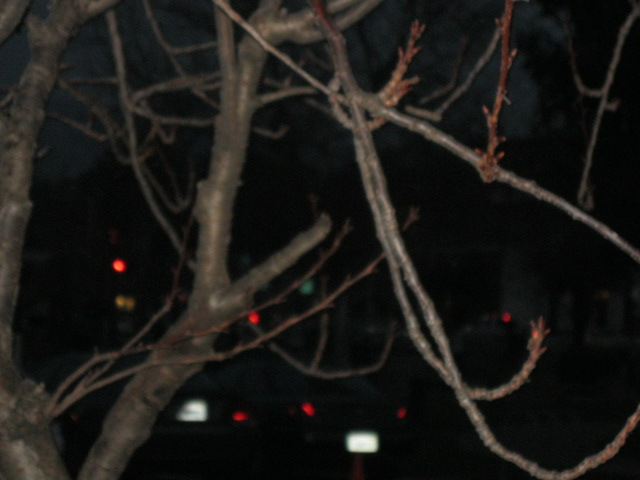 Tree branch with lights behind, at night copy.JPG