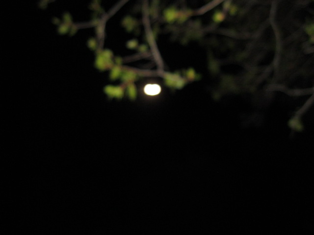 Moon hanging under tree branch copy.JPG