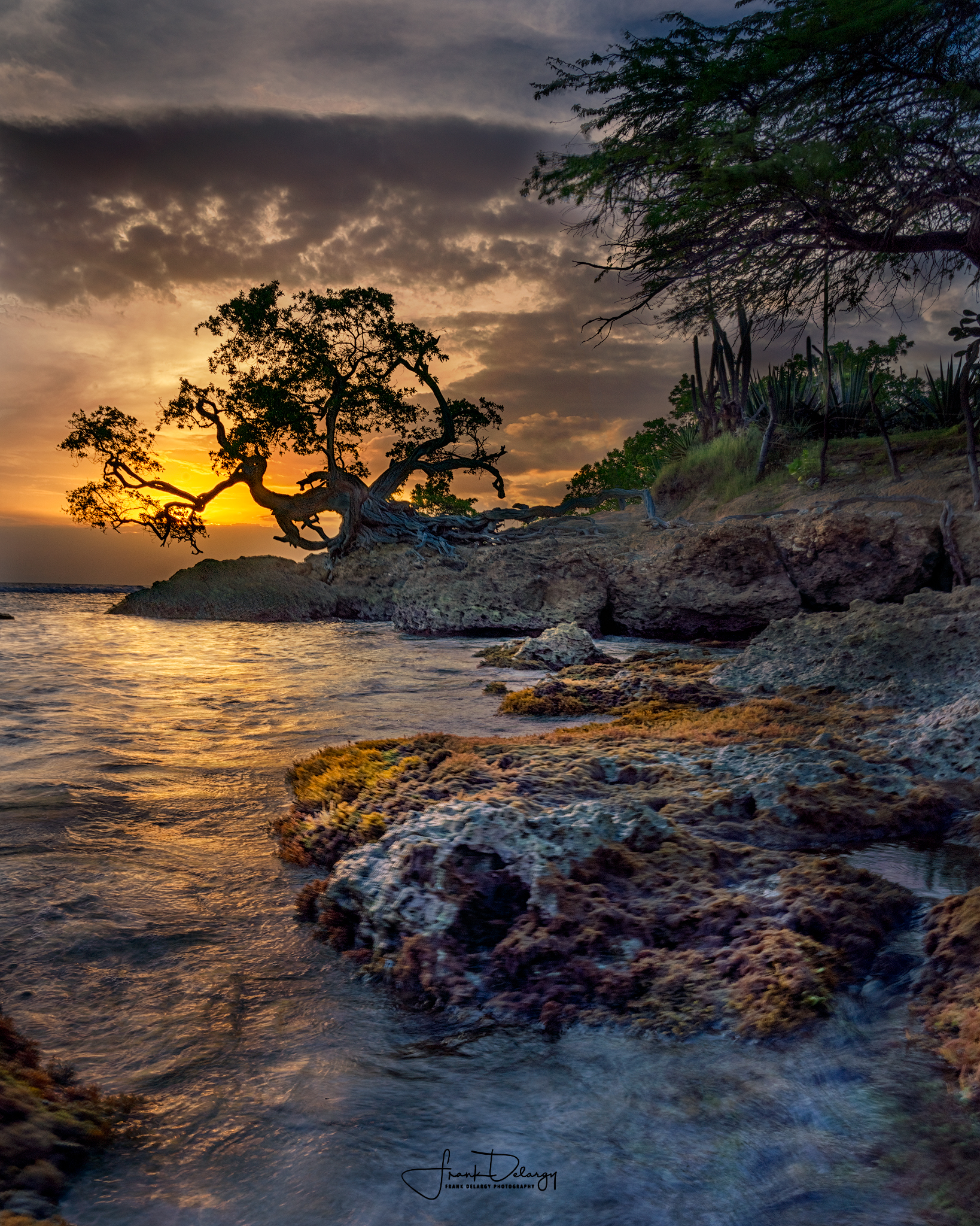_DSC3292--Tree-at-Treasure-Beach2.jpg