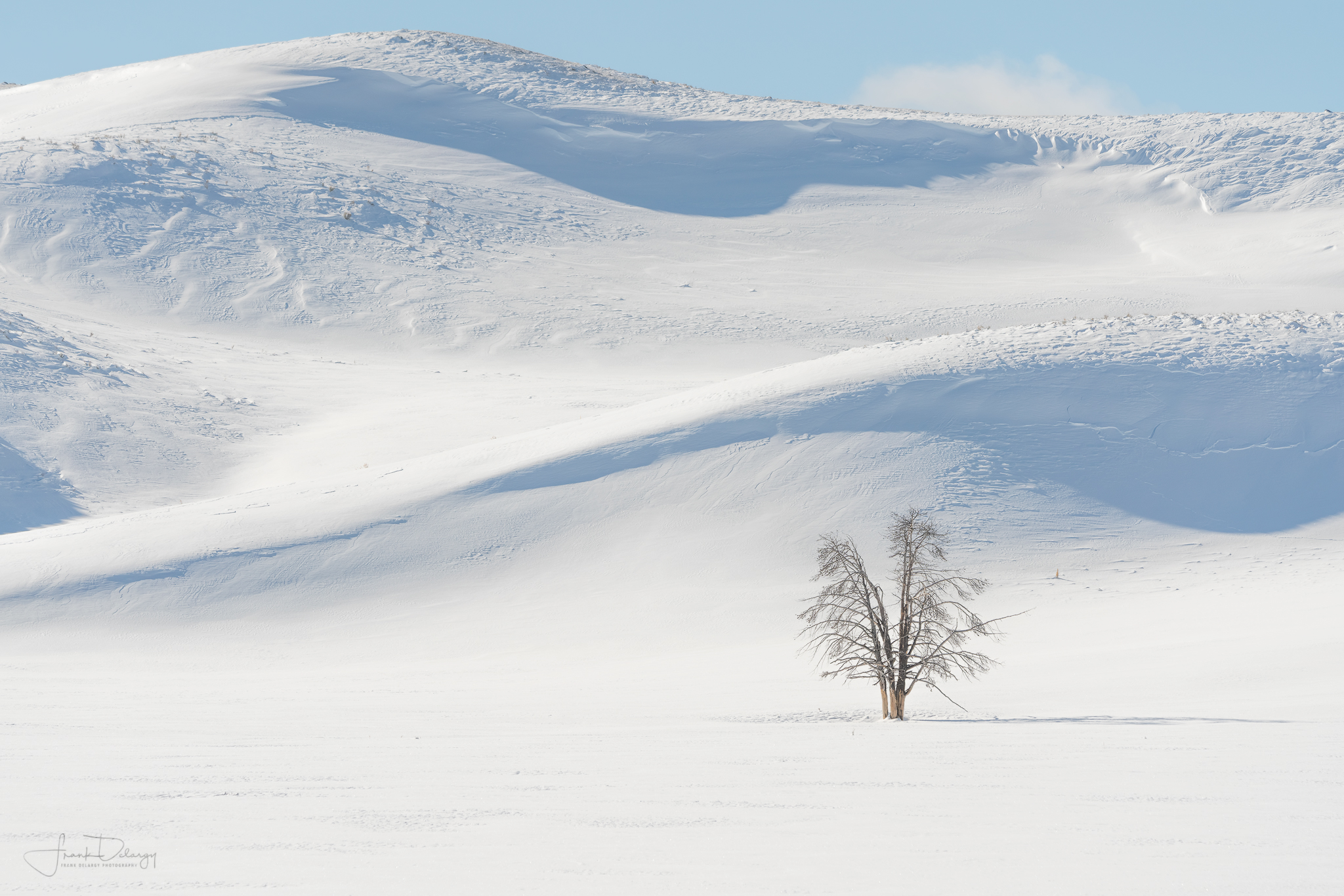 A lone tree in a wintery Yellowstone