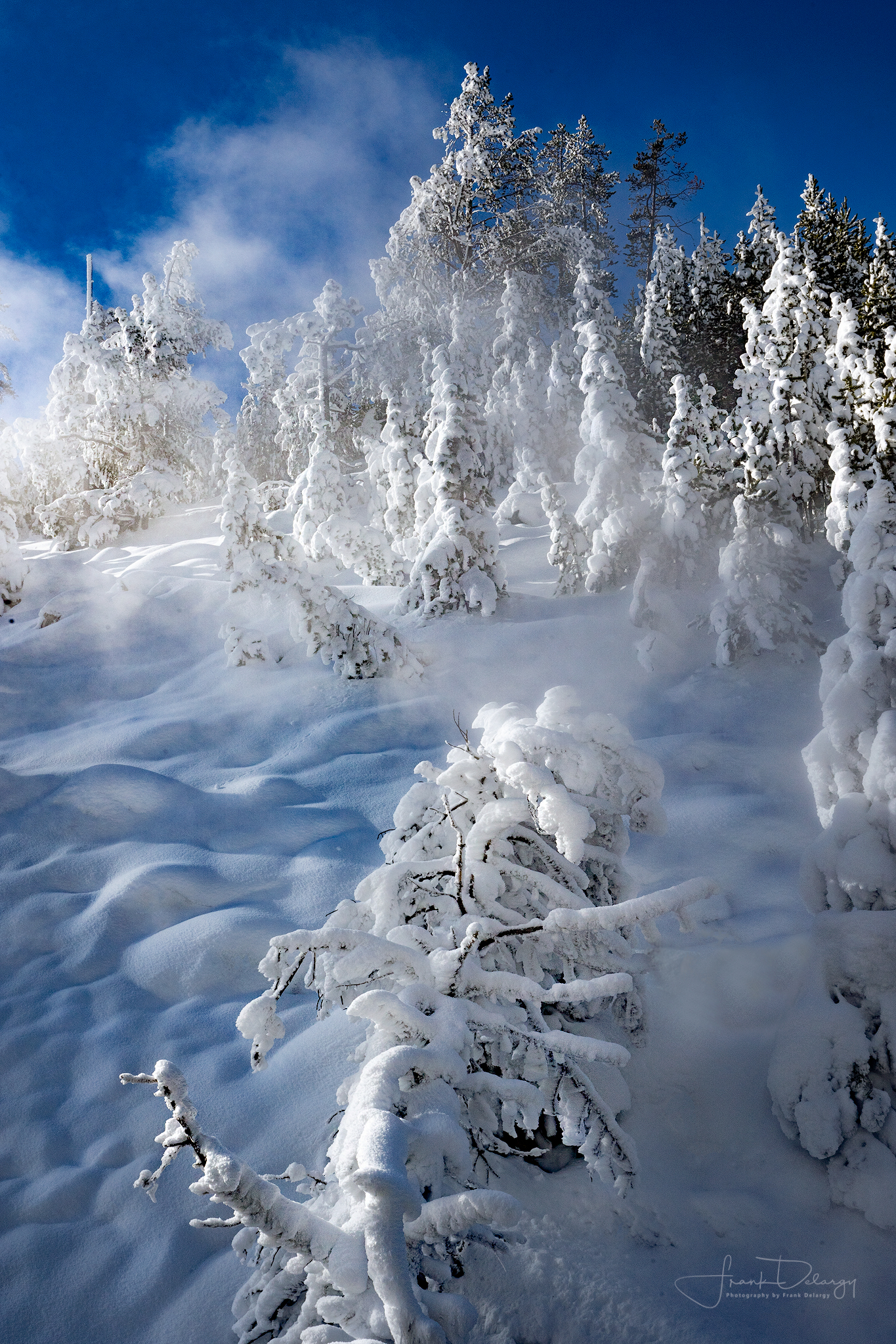 Winter landscape in Yellowstone