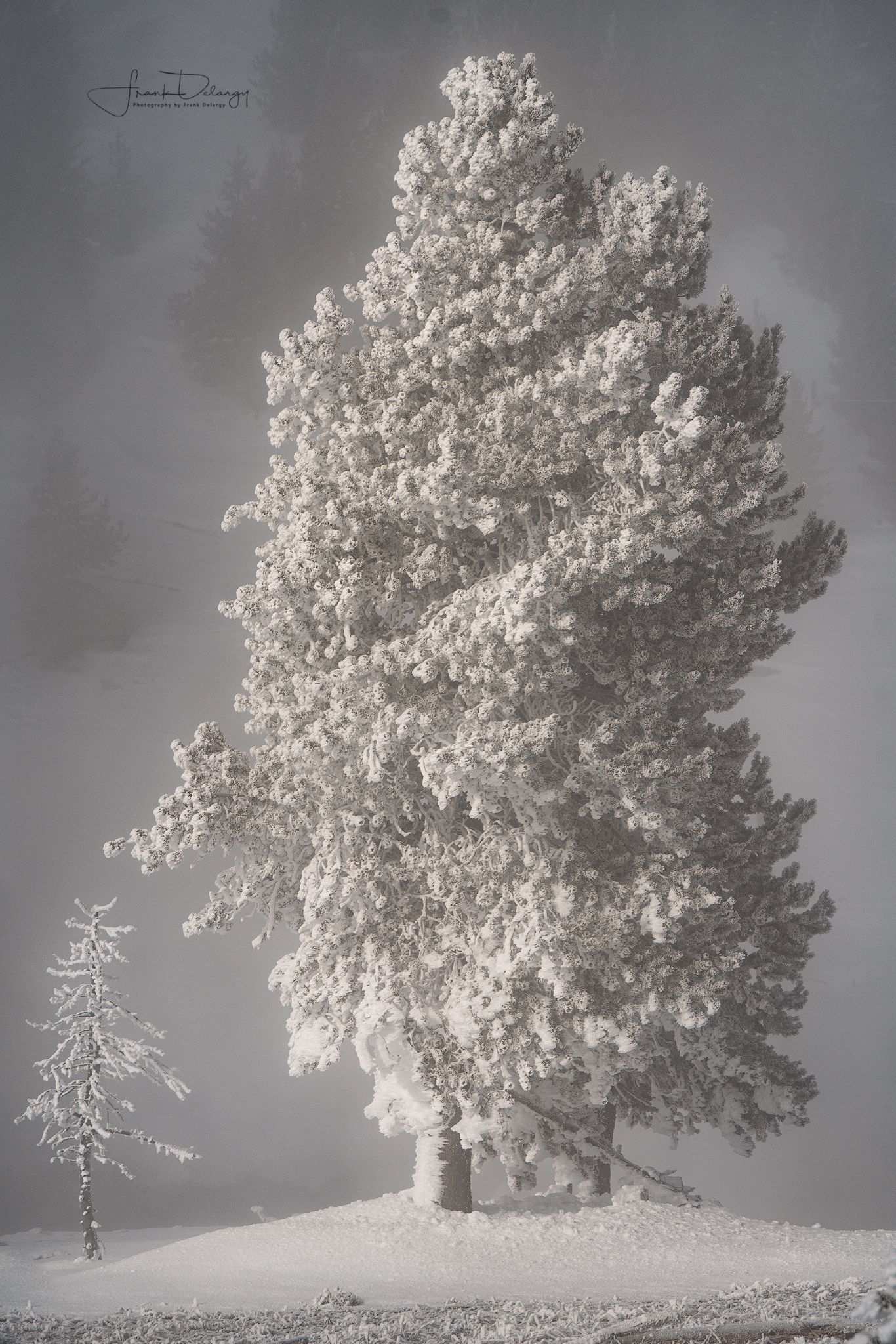 Ghost trees.. steam from the hot springs freezes on the branches forming ghostly shapes.