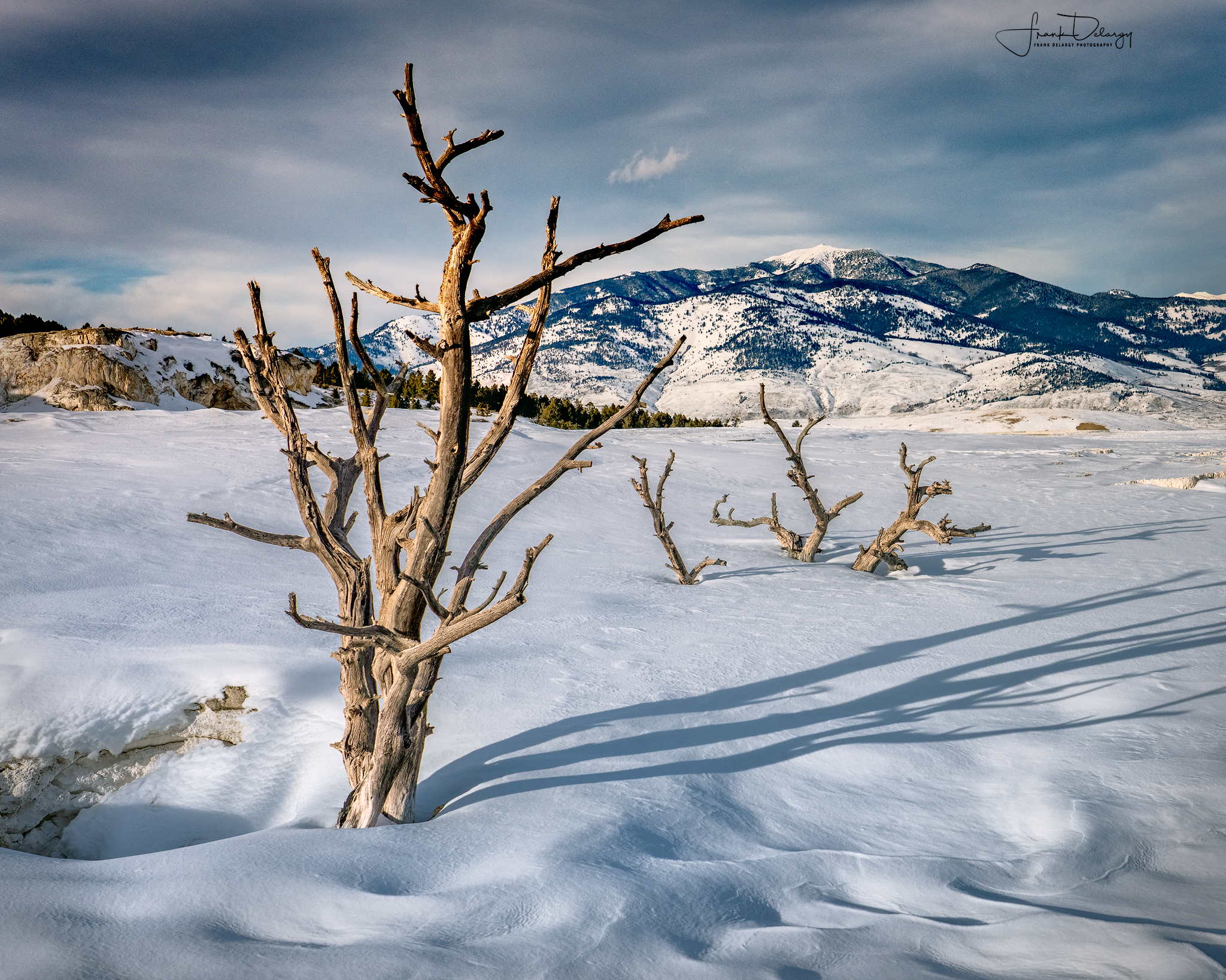 Trees on top of Mammoth Hot Springs.