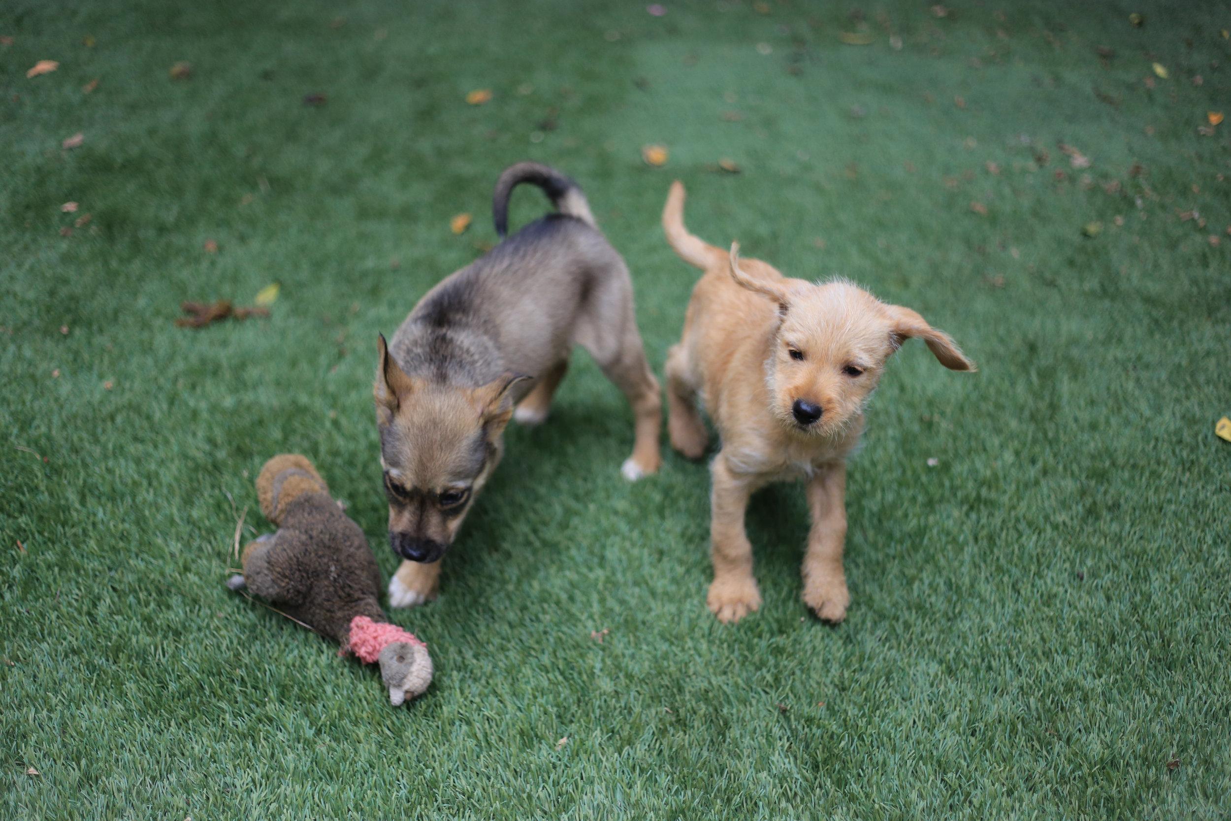 Volunteers in Defense of Animals