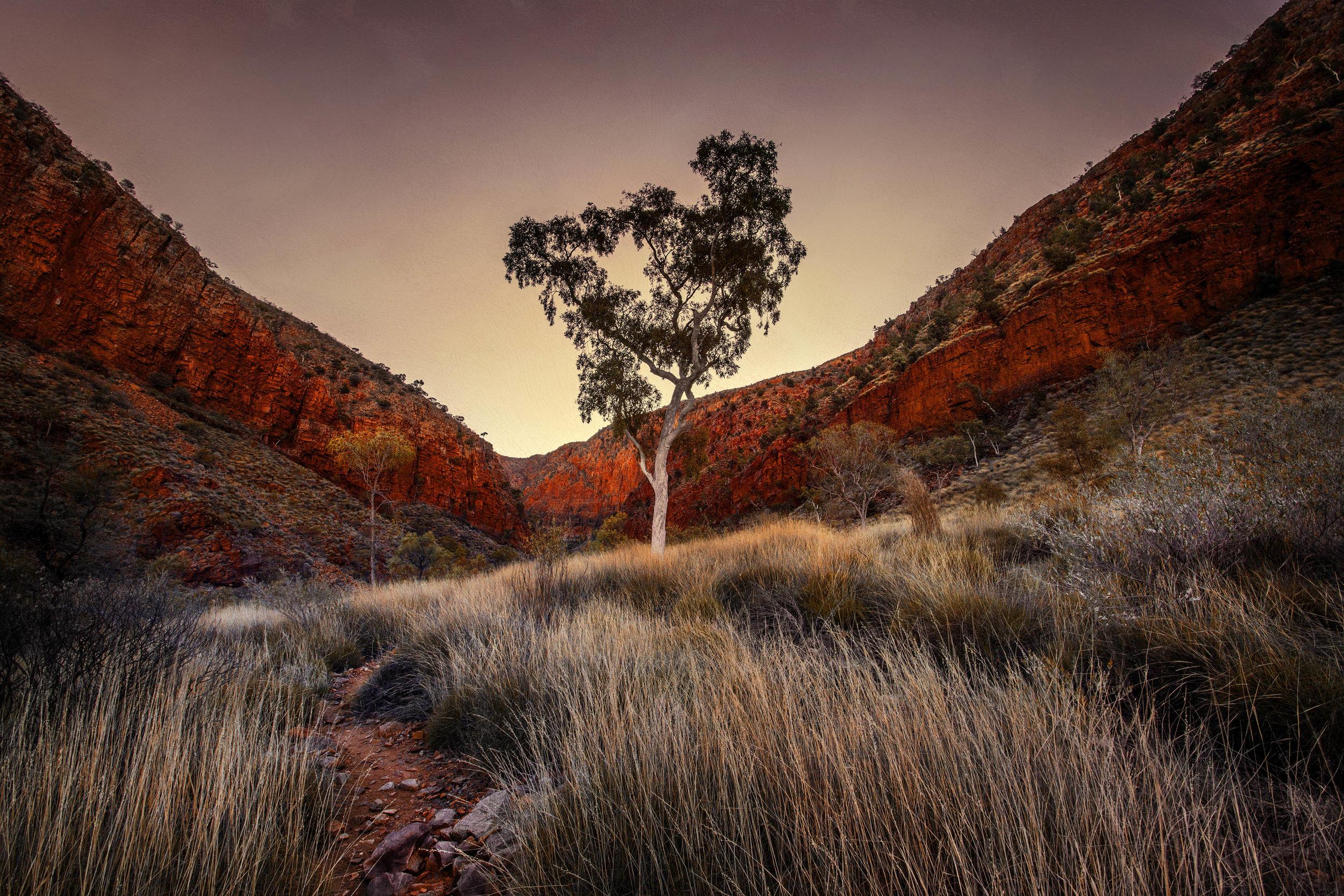 DesertGarden2.jpg