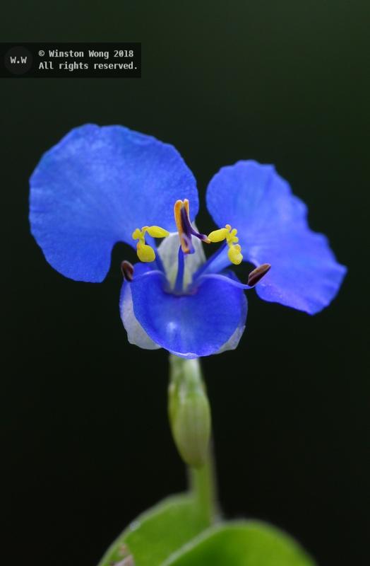 flora0003.jpg