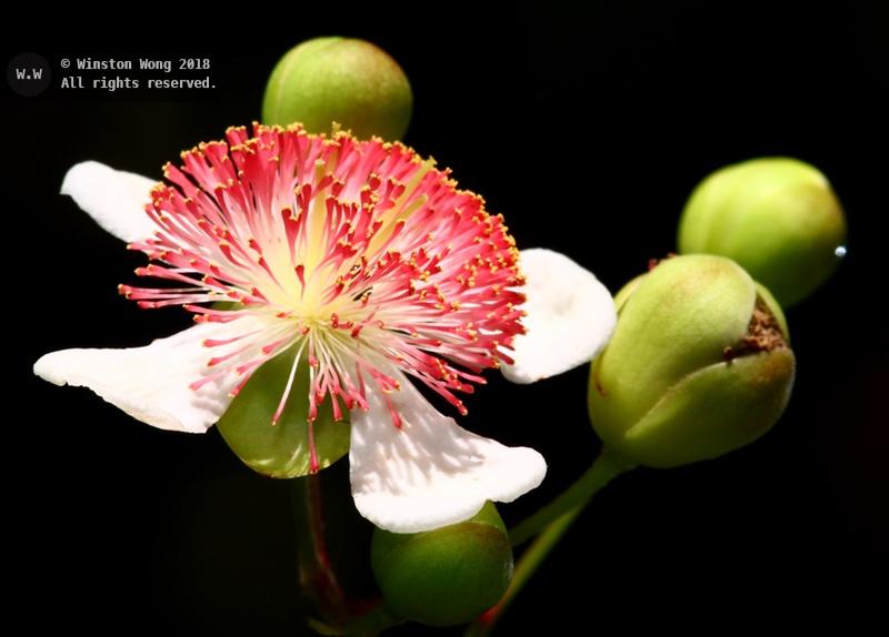 flora0004.jpg