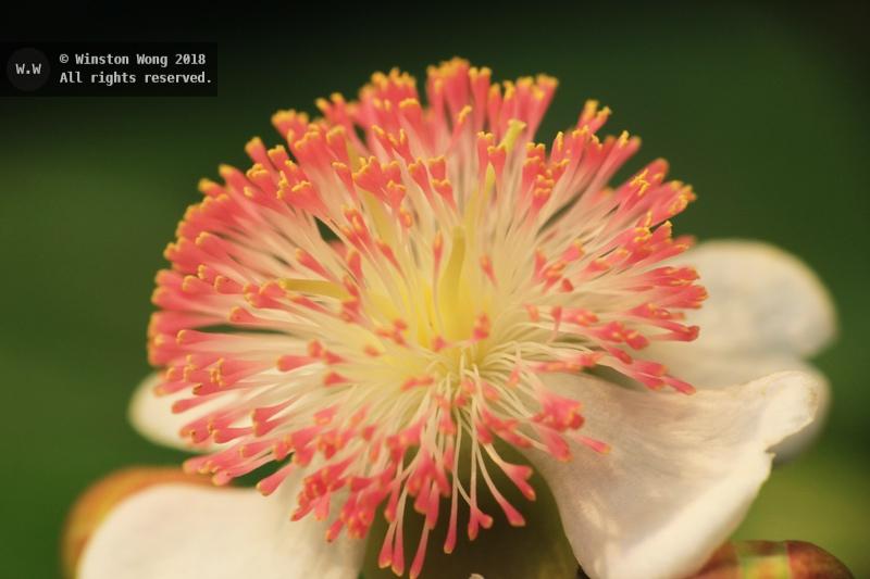 flora0010.jpg