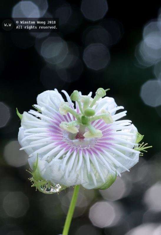 flora0012.jpg
