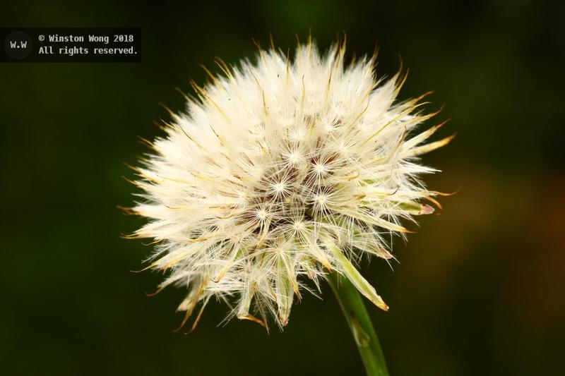 flora0013.jpg