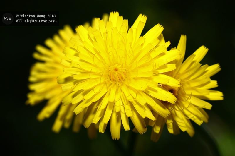 flora0014.jpg
