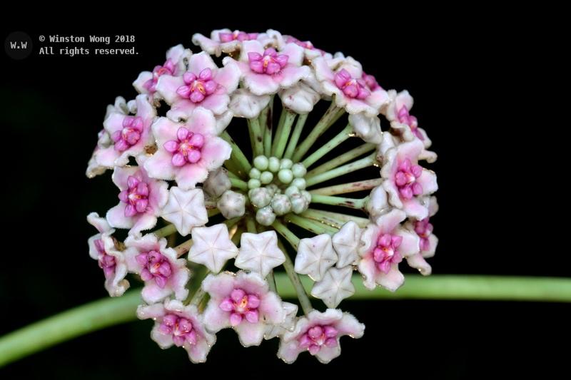 flora0016.jpg