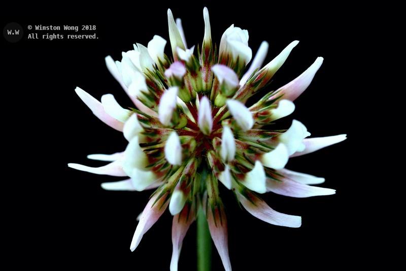 flora0018.jpg