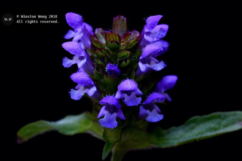 flora0019.jpg