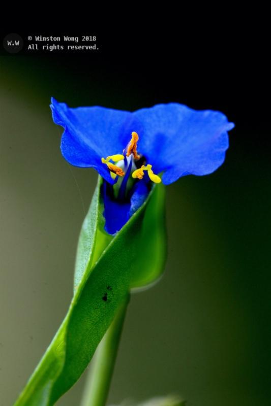 flora0022.jpg