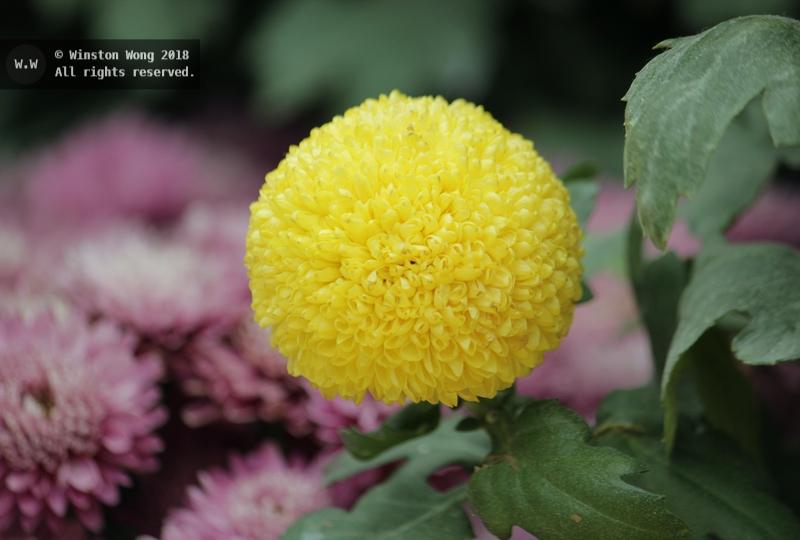 flora0026.jpg