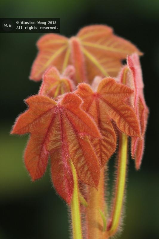 flora0028.jpg