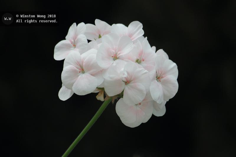 flora0029.jpg