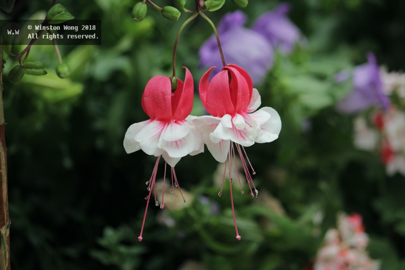 flora0031.jpg