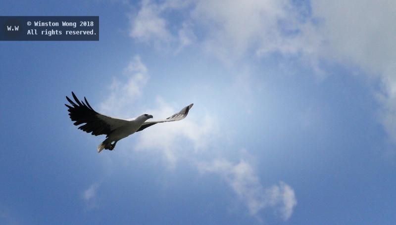 flight0012.jpg