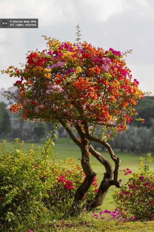 flora0033.jpg