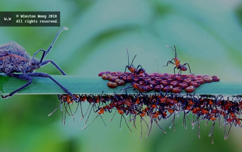 nesting0022.jpg