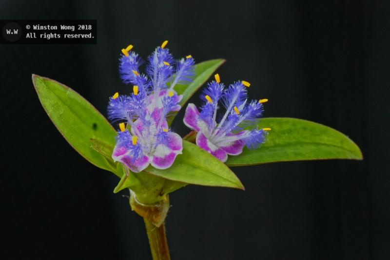 flora0035.jpg