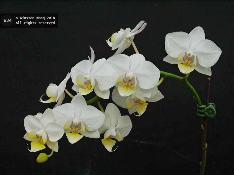 flora0039.jpg