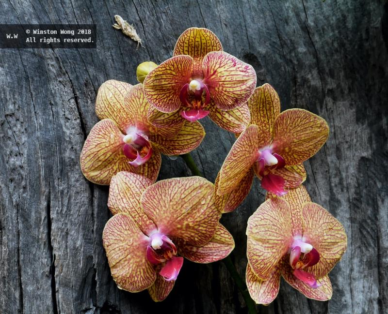 flora0040.jpg