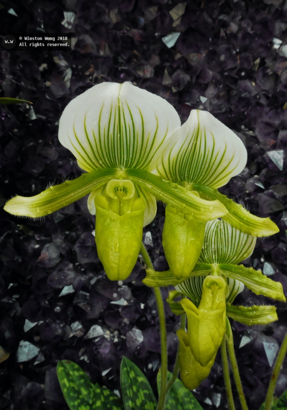 flora0041.jpg