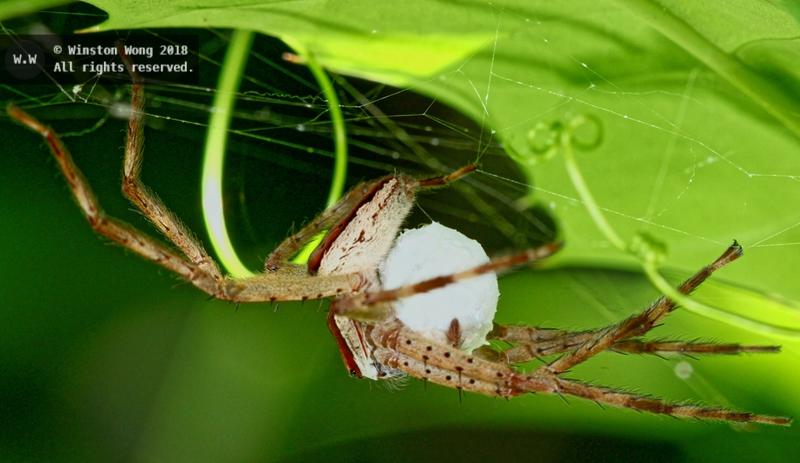 nesting0047.jpg