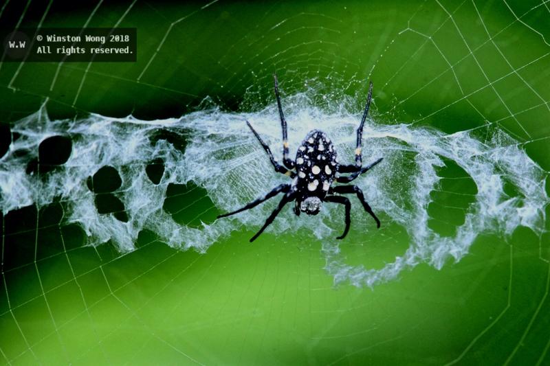 nesting0048.jpg