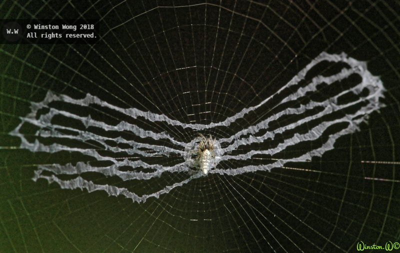 nesting0049.jpg