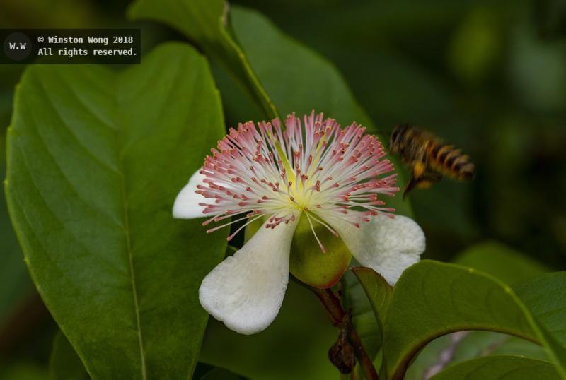 flora0051.jpg