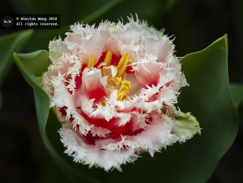 flora0052.jpg